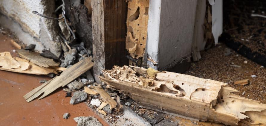 シロアリ被害のイメージ
